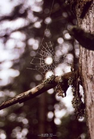 Gorce: cobweb