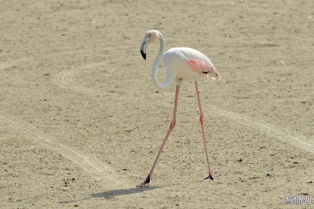 Ras al Khor Wildlife Sanctuary - Dubai, UAE