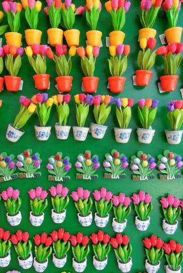 Amsterdam - tulips