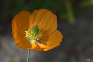 drenthe-flowers-40thousandkm-73748-001
