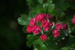 drenthe-flowers-40thousandkm-73749-001