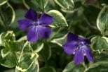drenthe-flowers-40thousandkm-73751-001