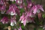 drenthe-flowers-40thousandkm-73752-001