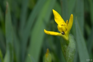 drenthe-flowers-40thousandkm-73814-001