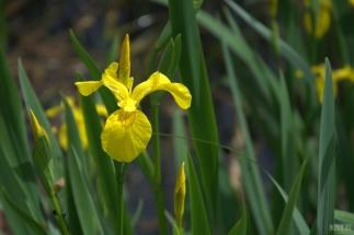 drenthe-flowers-40thousandkm-73816-001