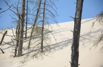 Słowiński National Park: dunes and dead tress