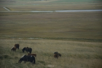Iceland: Icelandic horses