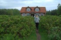 At the Herbal Corner / Ziołowy Zakątek - rose garden and rose café