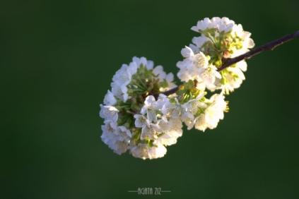 DSC_2543-001