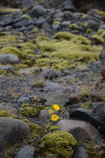 iceland-myrdalsjokull-40thousandkm-86942-001