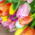 dubai-flowers-tulips-40thousandkm-01785-2