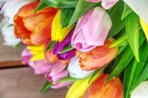 dubai-flowers-tulips-40thousandkm-01785-2