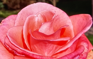 poland-flowers-40thousandkm-94920-25