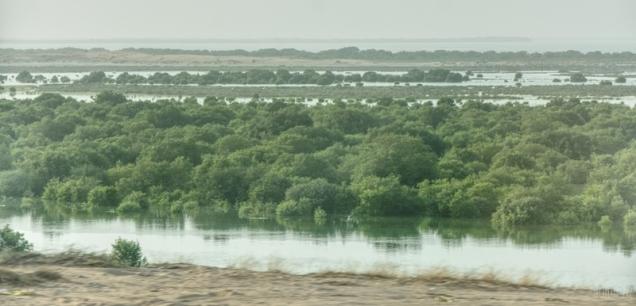Mangroves - Umm Al Quwain, UAE