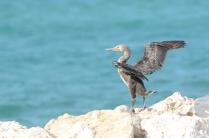 Amwaj Islands, Bahrain