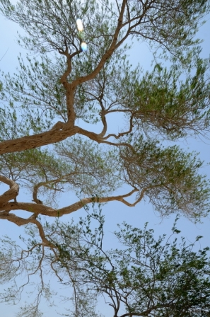 Tree of Life - Bahrain