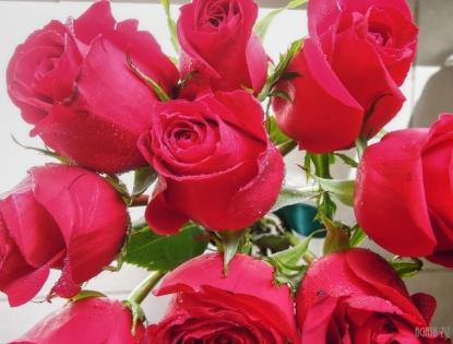 flowers-dubai-40thousandkm-08476-2