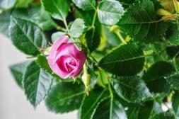 flowers-dubai-40thousandkm-09951-2