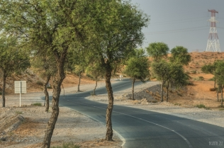 uae-ghaf-tree-40thousandkm-00319-2