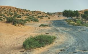 Desert - RAK, UAE