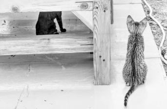 uae-rak-cats-40thousandkm-02091-21