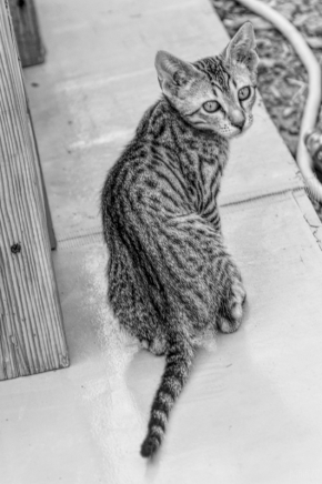 uae-rak-cats-40thousandkm-02095-21