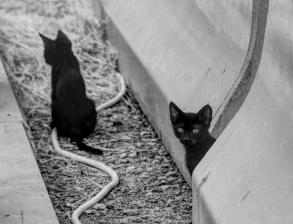 uae-rak-cats-40thousandkm-02098-21