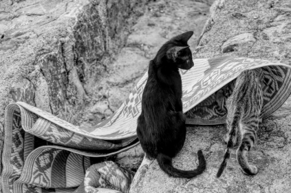 uae-rak-cats-40thousandkm-02112-2
