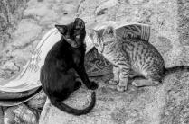 uae-rak-cats-40thousandkm-02115-2
