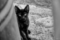 uae-rak-cats-40thousandkm-02120-2