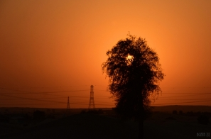 Desert - UAE