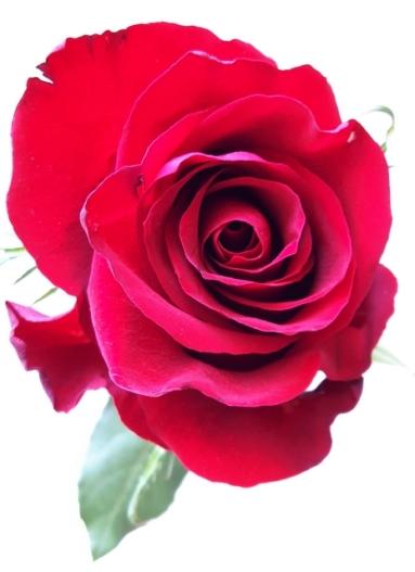 uae-flowers-40thousandkm-02335-2