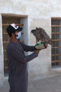Falcon -Al Jazirah Al Hamra - Ras Al Khaimah, UAE