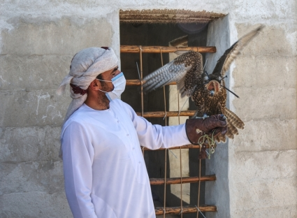 Falcon - Al Jazirah Al Hamra - Ras Al Khaimah, UAE