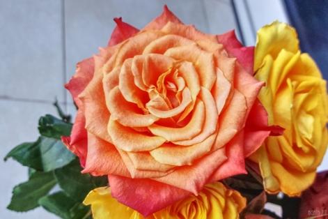 uae-dubai-rose-40thousandkm-01318-2