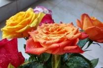 uae-dubai-rose-40thousandkm-05129-2
