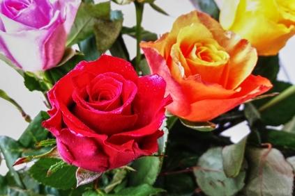 uae-dubai-roses-40thousandkm-03822-2