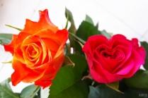 uae-dubai-roses-40thousandkm-04554-2