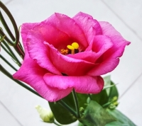uae-dubai-flowers-40thousandkm-210435-003